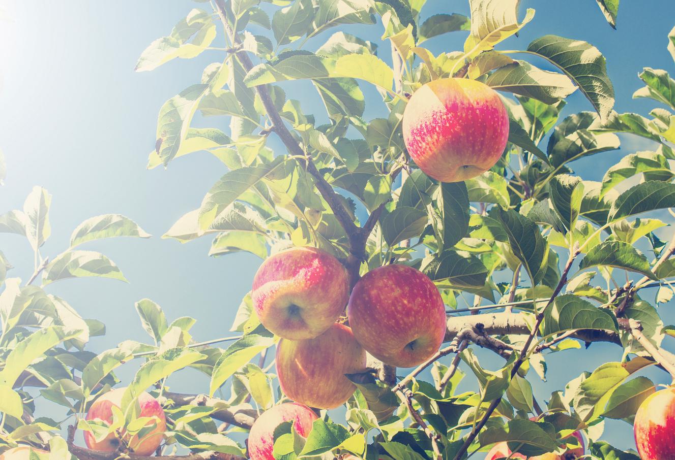 Nieuwe Oogst Appels