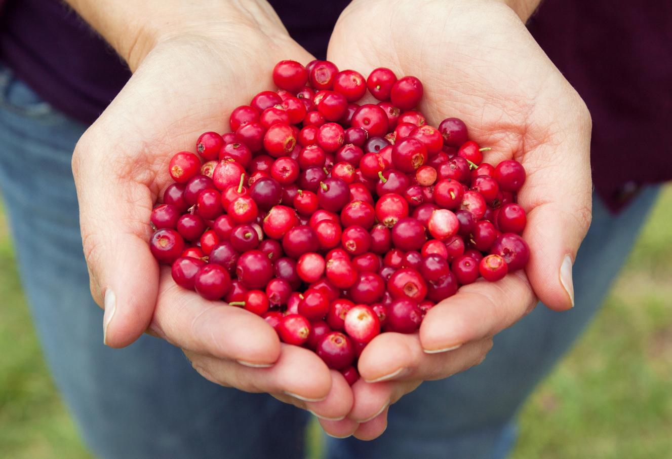 Cranberry-seizoen Doet Zijn Intrede