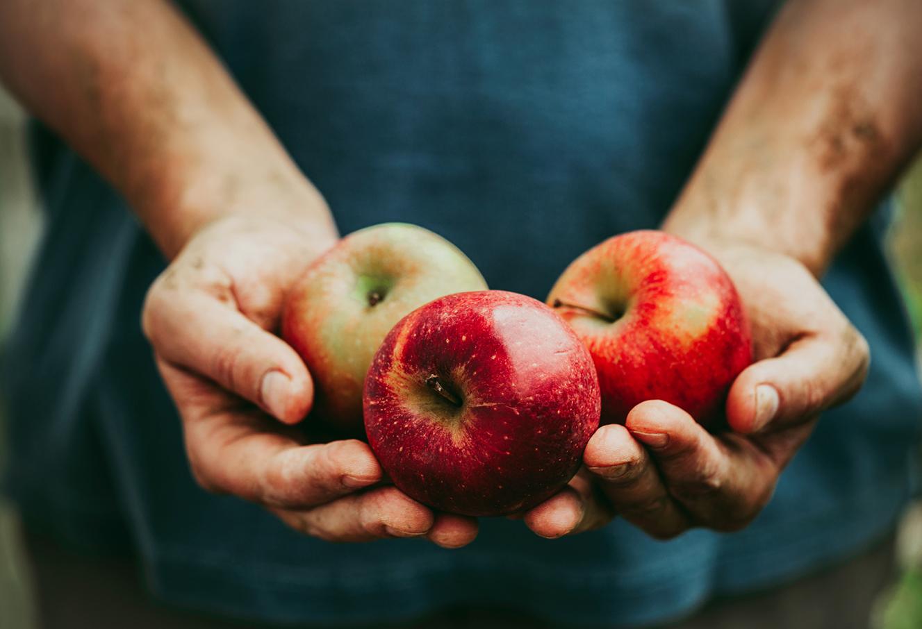 Red Meat Radijs En Heerlijke Goudreinet Appels